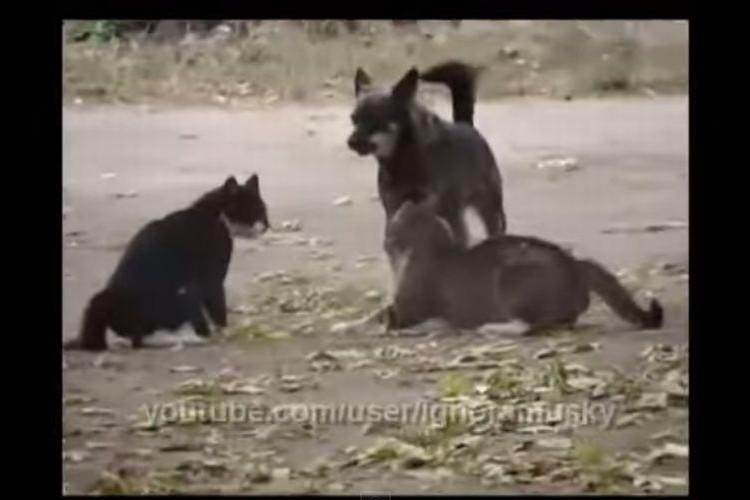 【動画】リアル犬のおまわりさん!お仕事その1「けんかの仲裁」