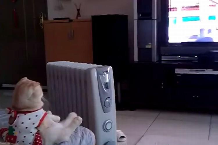 【動画】まるで人間!!座ってテレビを観る猫!
