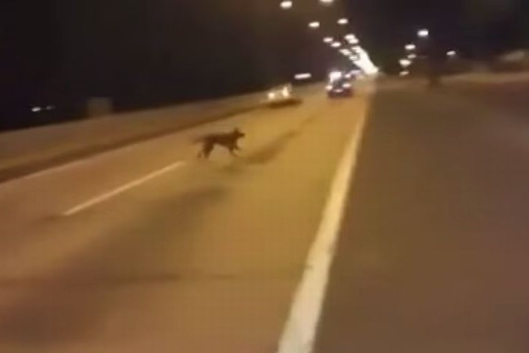 【不思議動画】テレポーテーション!?公道でのドラックレースで犬が急に現れた!!