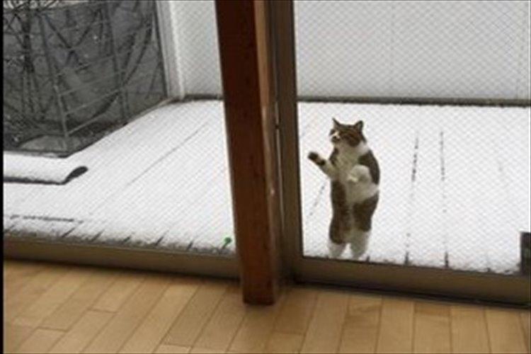 Twitterで話題!!雪を見る猫がかわいい!寒いけど見たい!でも寒い・・・