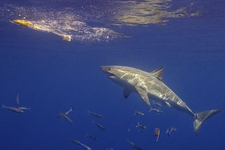 【シャークアタック】サメに遭遇したら心がけたい5つのこと