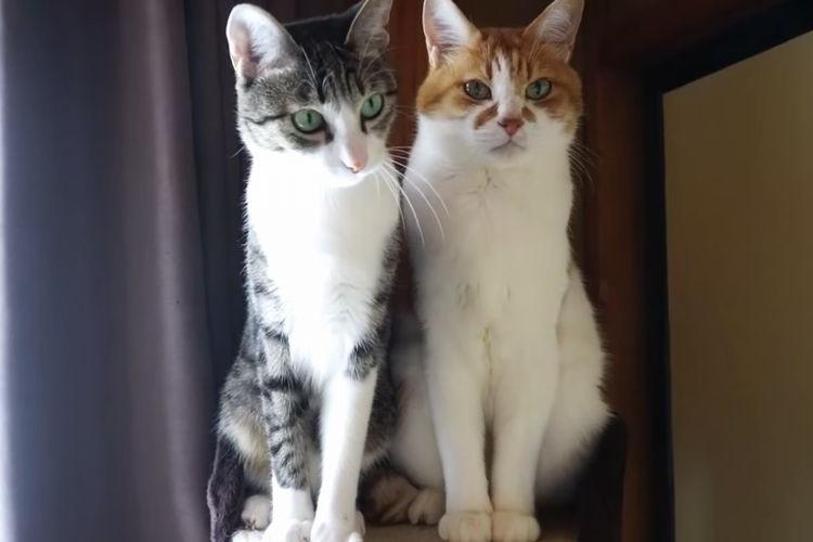 【奇跡の対比】反応する猫、しない猫