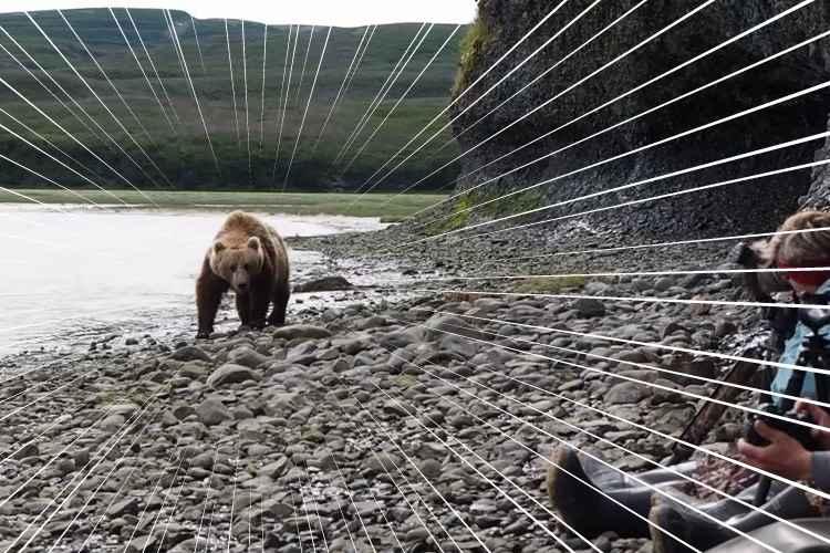 【衝撃映像】緊迫感溢れる2分間。ヒグマがわずか数メートル先を通り過ぎる