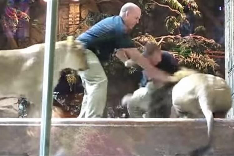 「パパ、人間を襲っちゃダメよ!」飼育員にじゃれる雄ライオンを制す雌ライオンがカッコいい