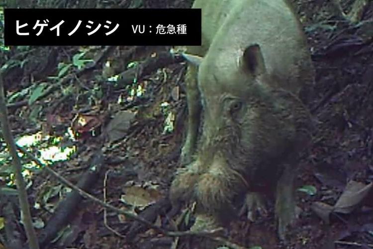 """ボルネオ島の絶滅危惧種を観測するカメラに""""絶対に映ってはいけないもの""""が"""