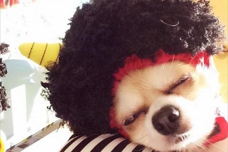 「福はウチ、鬼はイヌ?」今日はイヌもネコも鬼になる節分の日