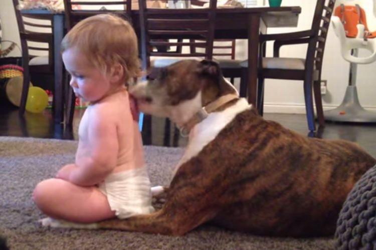 【癒し】犬に背中を舐められて気持ちいい!何度も催促する赤ちゃんがかわいい!