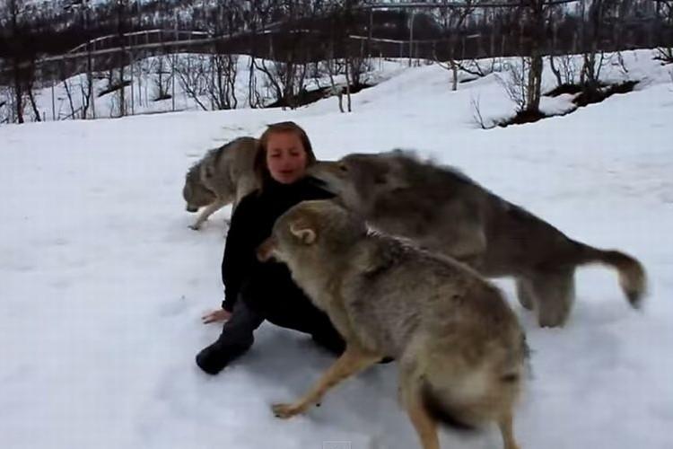 【感動の再会】オオカミと人間がこんなにも心が通じるものだったとは!