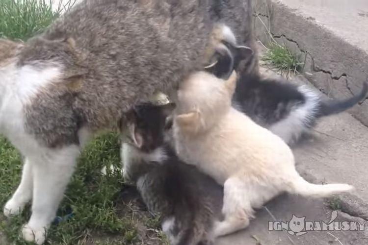 【間違い探し】母猫のオッパイに群る仔猫たち、あれっ!?一匹仔犬がいるよ!!