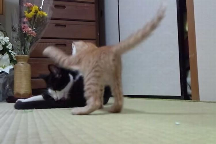 【8秒動画】『えいっ!』かつて、これほどまでにかわいい猫パンチがあっただろうか?