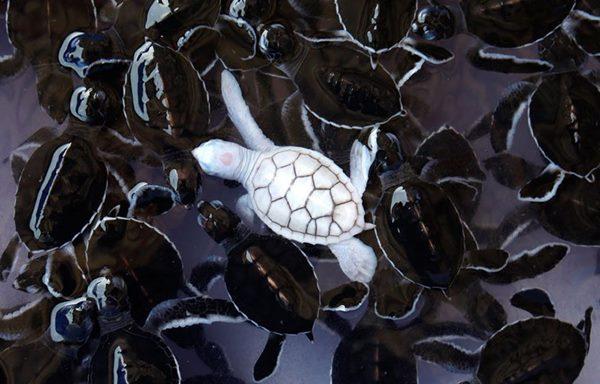 albino-animals-3-2__880r