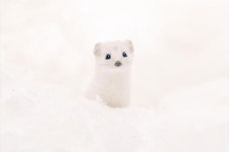 会いに行きたくなる!北海道でしか見られない貴重な動物たち