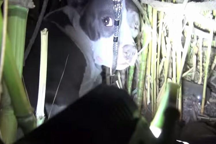 片目を失った犬を保護…しかしその場から離れようとしない理由は母性だった!
