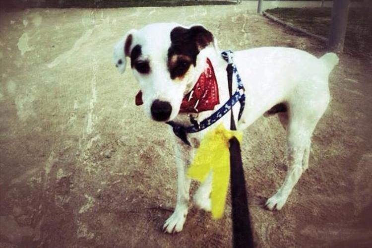 知っていましたか?黄色いリボンの犬を見かけたらそっと見守ってください