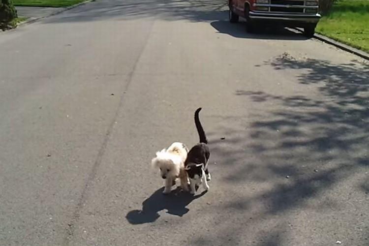 目が見えなくなってしまった仲間の犬を身体を寄せ導く猫!