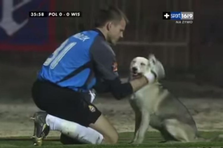 サッカー試合中に犬乱入!駆け回る犬を手懐けたキーパーが紳士的だと話題に!