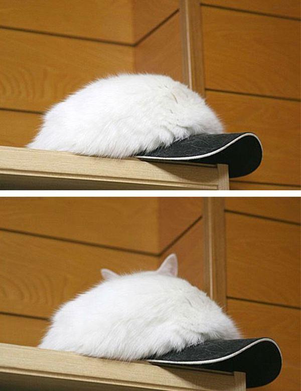ninja-cats-2-1__605r