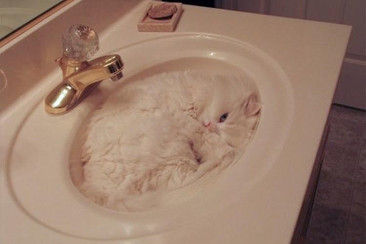 えっ!?どこにいるの?完全に同化した猫たちの写真15選