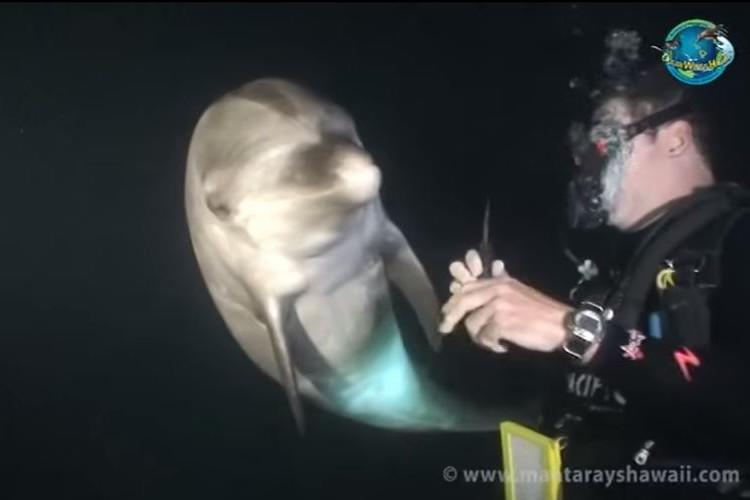 ダイバーに何かを訴える1匹のイルカ。思いが通じた救出劇
