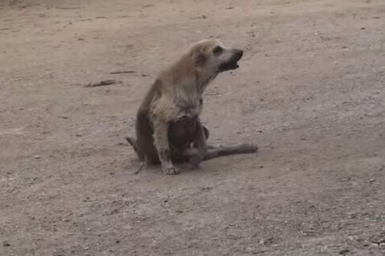かわいそうに...足を引きずる1匹の野良犬、途中から「あれっ?」ってなる動画