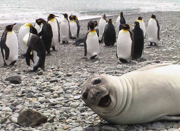funny-animal-photobombs-13__880r