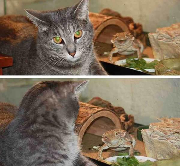 funny-animal-photobombs-16__880r