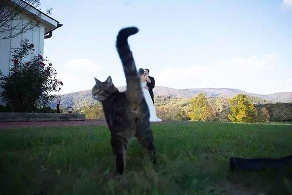 funny-animal-photobombs-17__880r