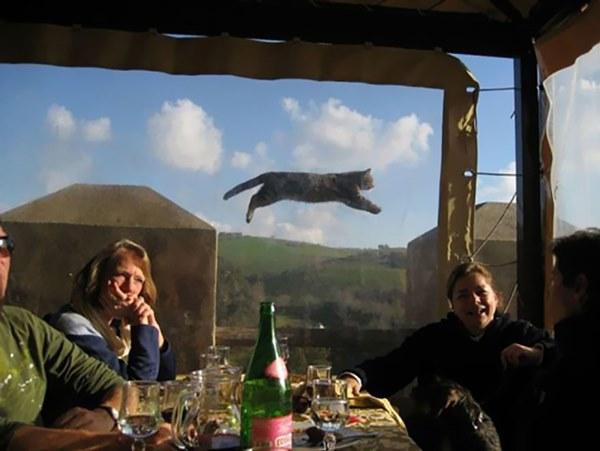 funny-animal-photobombs-30__880r