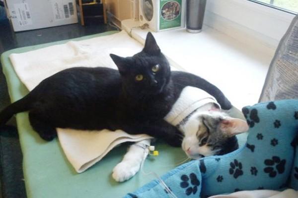 この優しさはどこからくるの?動物たちを癒す「黒猫のナース」が話題!