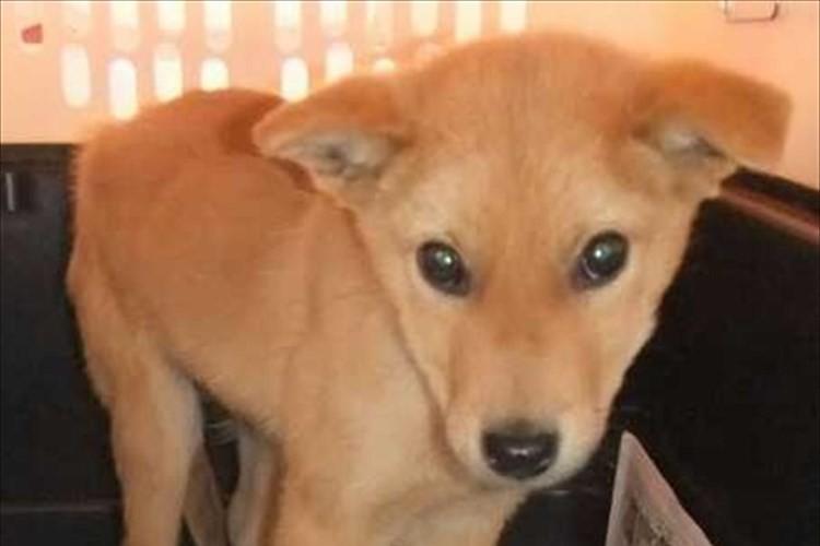 """殺処分を免れた犬「夢之丞」が、""""災害救助犬""""としてネパールで捜索活動中!"""