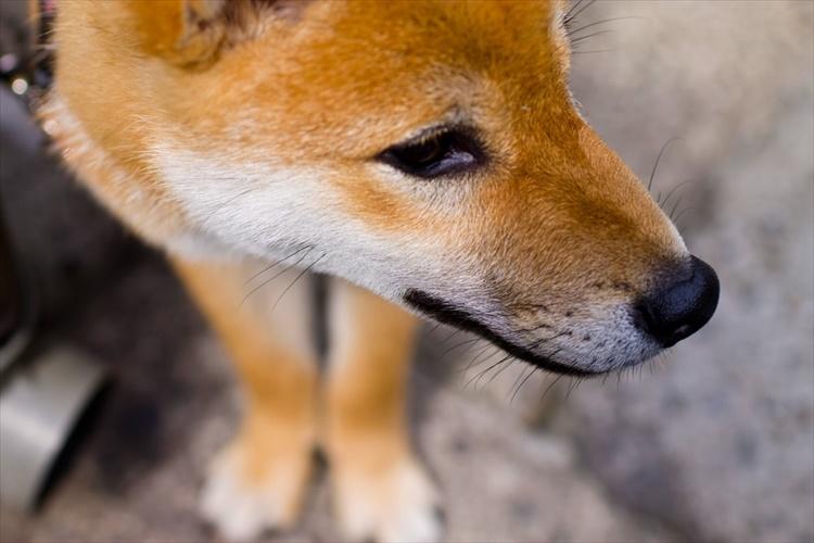犬は「びよびよ」猫は「ねうねう」…時代によって動物の鳴き声の表現が違った!?