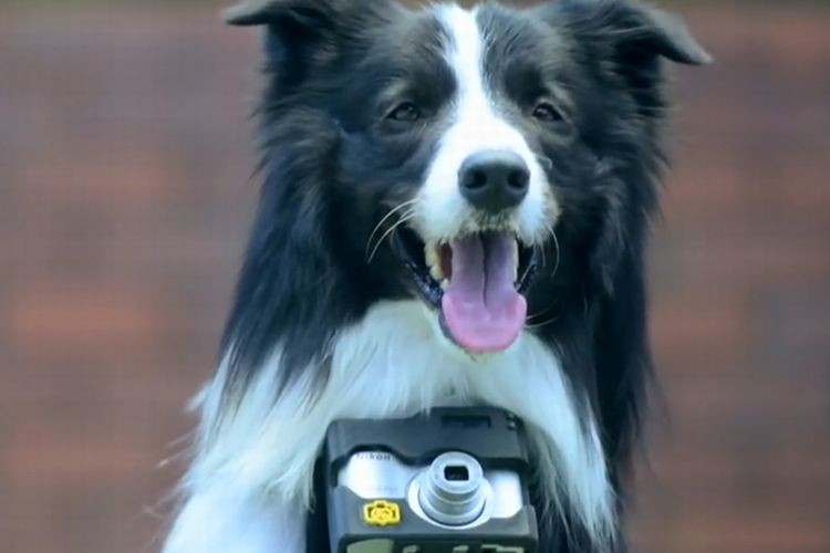 愛犬がカメラマンに!?心拍数が上がると撮影されるカメラが話題!
