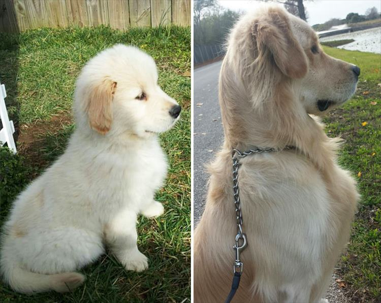 XX-before-and-after-dogs-growing-up-__880_R