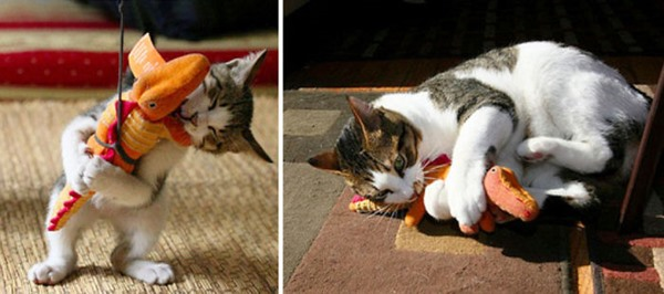 before-and-after-growing-up-cats-27__700r