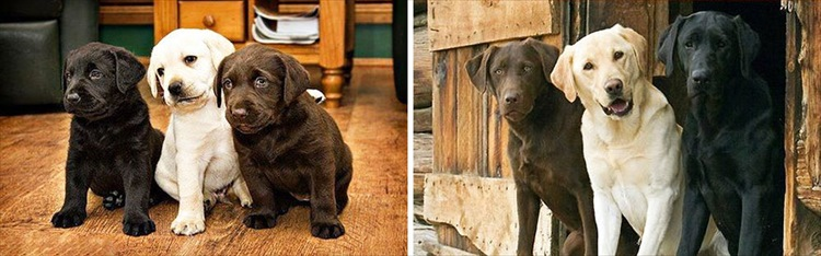 dogs-before-and-after-28__880_R
