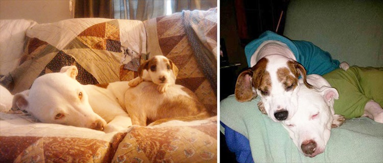 dogs-before-and-after-29__880_R