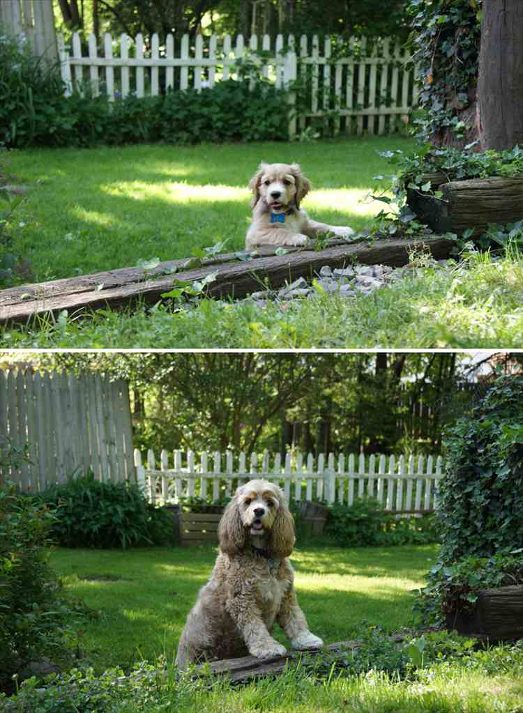 dogs-before-and-after-31__880_R