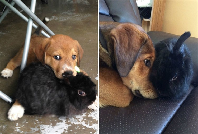 dogs-before-and-after-41__880_R