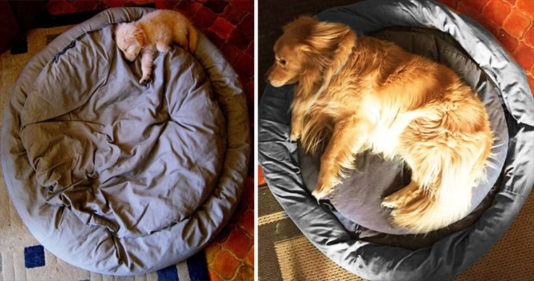 dogs-before-and-after-421__880_R