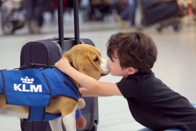 【トリビア?】オランダの空港には乗客の忘れ物を届けてくれる犬がいる!?