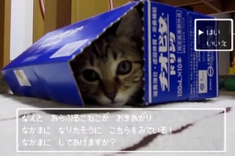 ドラクエ風動画「ドラクエな仔猫」がかわいすぎる!
