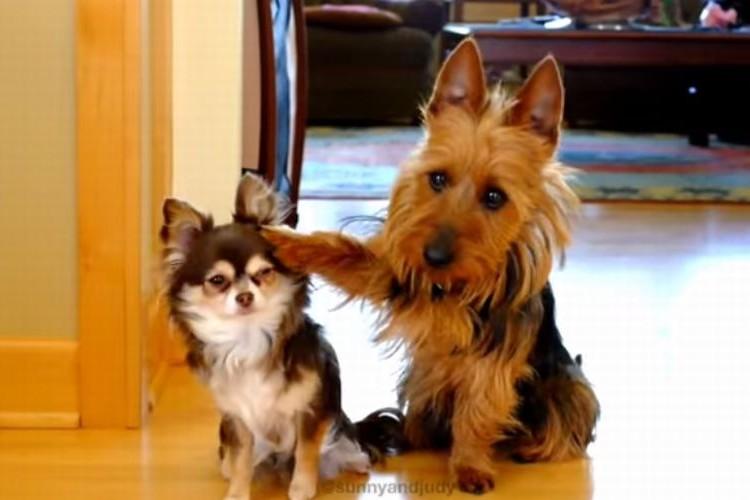 「あっ犯人こいつです!」仲間を売っちゃう犬がかわいい!