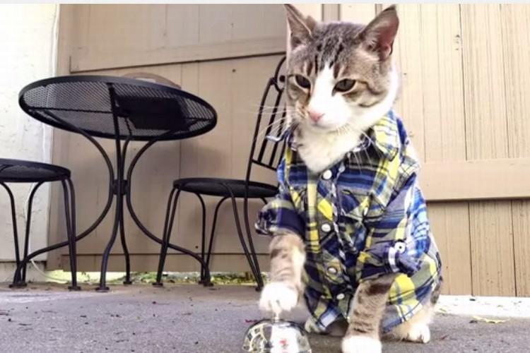 「チーン!」とすると餌を貰えることを完全に覚えてしまった猫