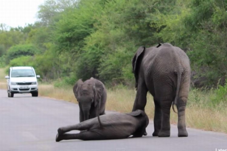 「ああああ疲れたよ~」道路の真ん中で駄々をこねる様子が人間っぽい