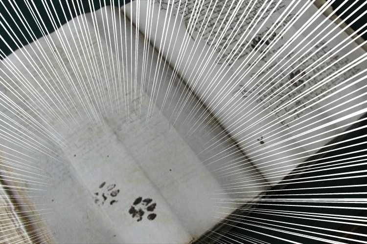 500年前の書物にも猫の足あとが発見!飼い主さんにはお馴染みの習性は昔も同じだった