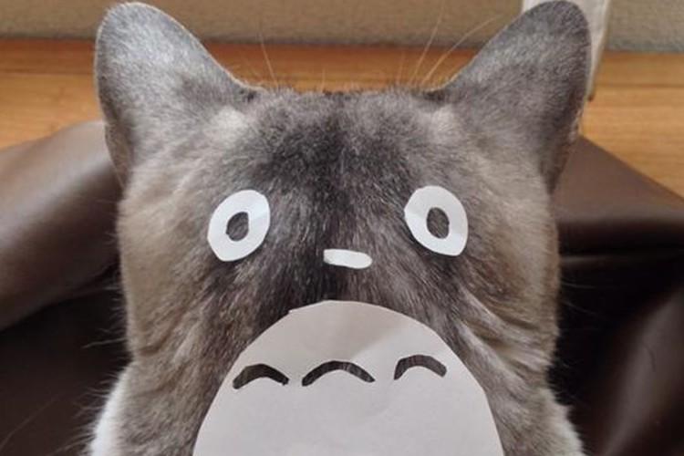 この発想はなかった…猫を一瞬にしてトロロにする方法とは!?