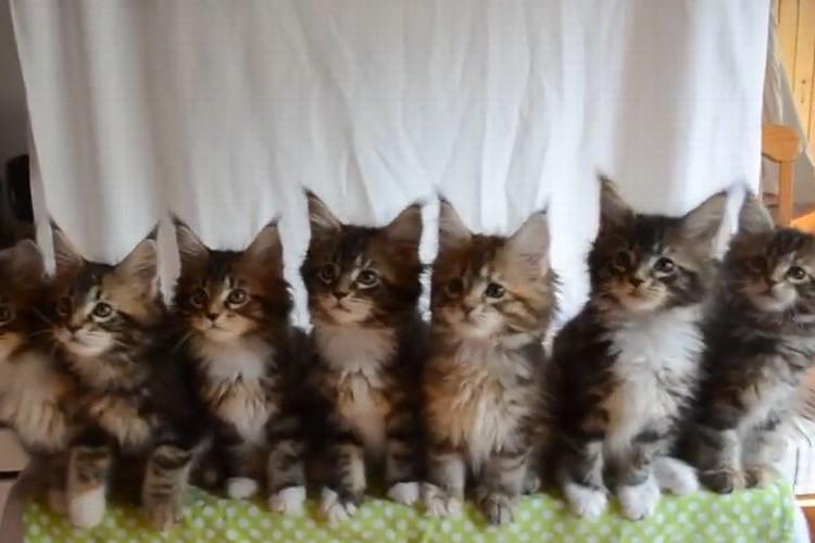 """""""まるでシンクロ""""のよう…息がぴったり過ぎる7匹の猫に胸キュン♪"""