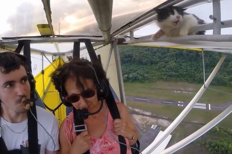 飛行機で飛んでいたら猫が同乗していた!無事だったの!?