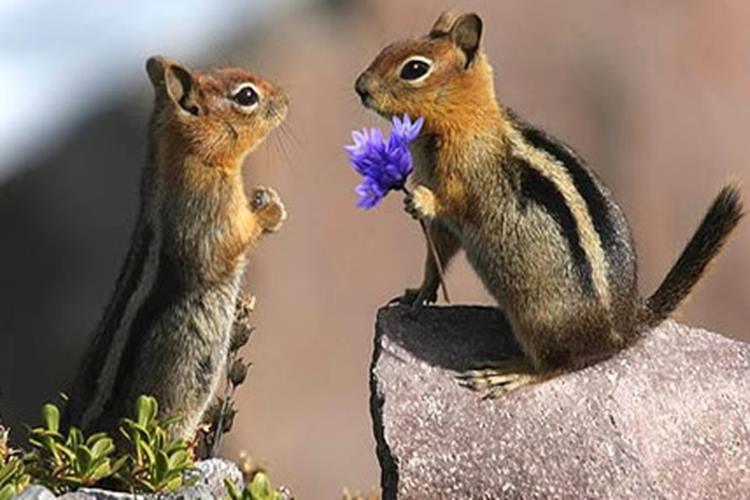 【アニマル・ラブ】愛が感じられる動物たちの写真25選