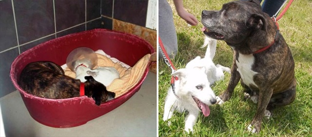 blind-dog-guide-best-friends-abandoned-rescued-stray-aid-shelter-glenn-buzz-6_R